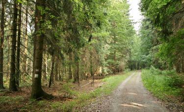 Droga nad Urwiskiem (Fot. krystian)