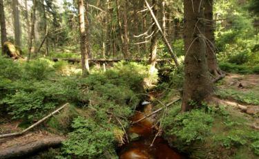 Jeden z dopływów potoku z okolic Białych Skał (Fot. krystian)