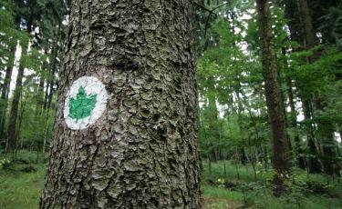Symbol i oznaczenie ścieżki edukacyjnej (Fot. krystian)