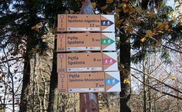 Szlaki biegowo-narciarskie (Fot. mateo)