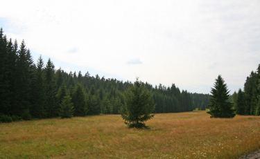 Torfowiska Batorowskie (Fot. krystian)
