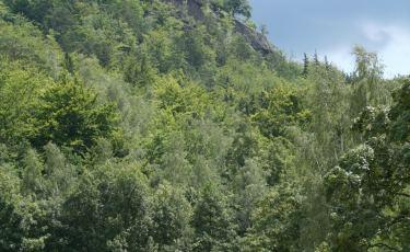 Zamek Chojnik widoczny na wzgórzu
