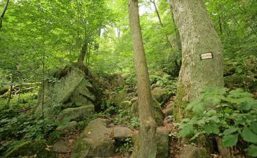 Żółty szlak Radków - Szczeliniec - Duszniki (Fot. krystian)